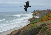 Carlsbad cliffs by Chris Hunkeler