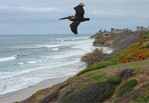 Carlsbad CA cliffs by Chris Hunkeler