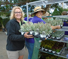 Annual Plant Sale San Diego Botanic Garden