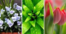 Annual Spring Home/Garden Show